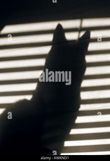 Schatten der Katze und Jalousien Stockbild