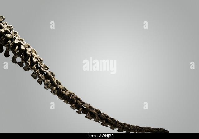 Skelett Heck Stockbild