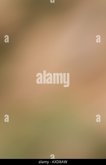 Abstrakt Stockbild
