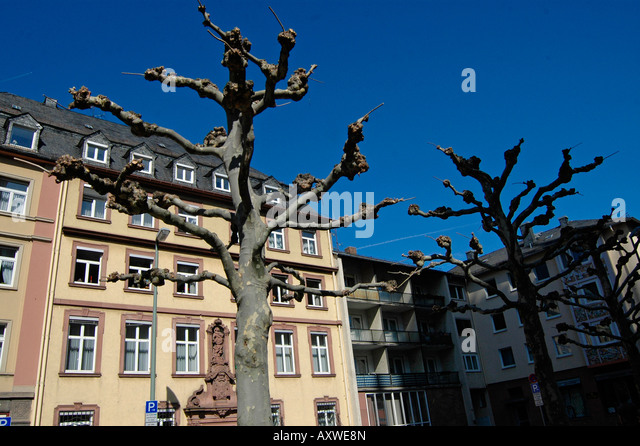 exotic trees in frankfurt germany stockfotos exotic trees in frankfurt germany bilder alamy. Black Bedroom Furniture Sets. Home Design Ideas