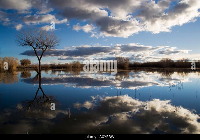 Kahler Baum spiegelt sich im Wasser von einer Aue, Bosque del Apache National Wildlife Refuge, New Mexico, USA, Stockbild
