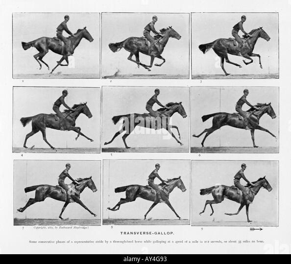 Muybridge Pferde Galopp Stockbild