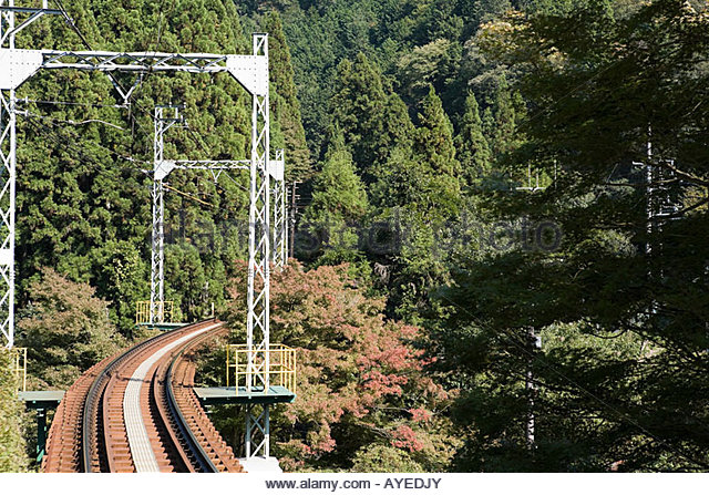 Gleis und Bäume Stockbild