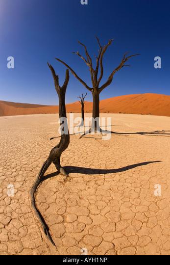 Tote Bäume, Namib-Wüste, Namibia, Afrika Stockbild