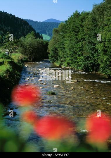 Gastvogelmanagement, Wildbach, Dichter Baumbestand am Flussufer, Gutachlandschaft, Gutach (Schwarzwaldbahn), Schwarzwald, Stockbild