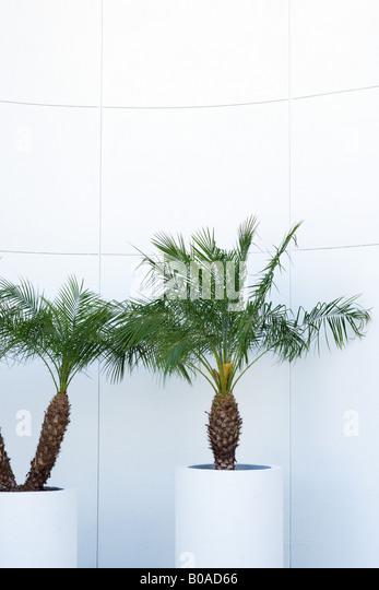 Topfpflanzen Palmen Stockbild