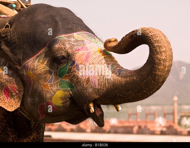 Elefant, Jaipur, Indien Stockbild
