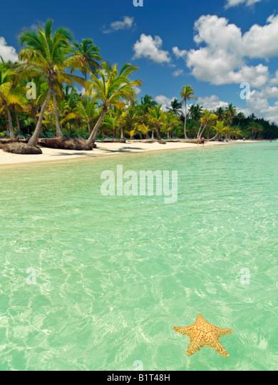 Dominikanische Republik Punta Cana Bavaro Beach,, Seestern auf ruhigen Wasser mit blauem Himmel und Palmen gesäumten Stockbild