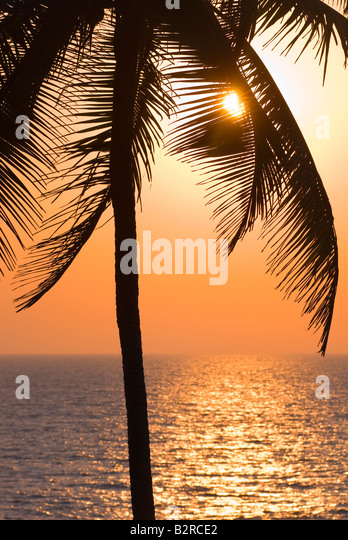 Palmen, Arambol, Goa, Indien, Subkontinent, Asien Stockbild