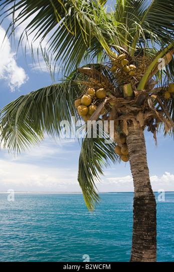 Eine Kokospalme und das Meer-tahiti Stockbild