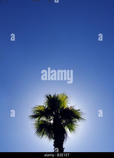 Der Spitze einer Palme in klaren, blauen Himmel Stockbild