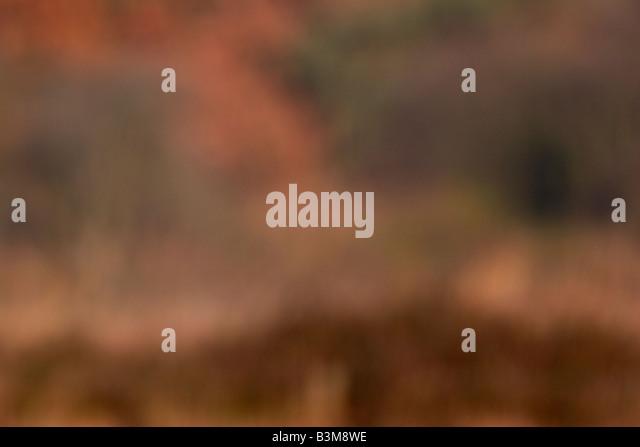 Abstrakte Herbstfärbung Stockbild