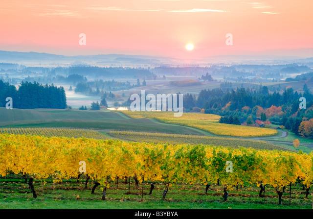 Fünf Berge Weinberg Herbstfarben und Sonnenaufgang Oregon Stockbild