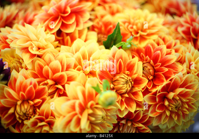 Blumensträuße von bunten Blumen selektiven Fokus Stockbild