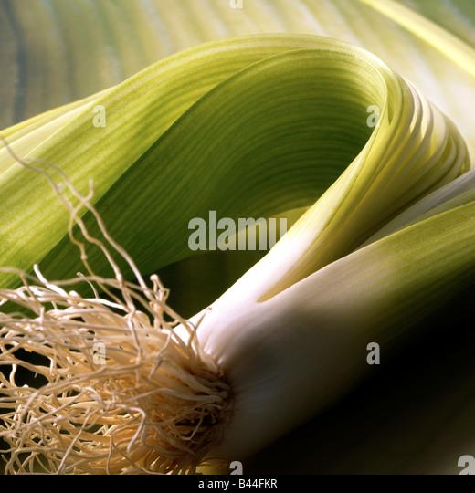 Lauch Stockbild