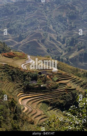 Terrassierte Reisfelder außerhalb des Dorfes von Sapa, Vietnam Stockbild