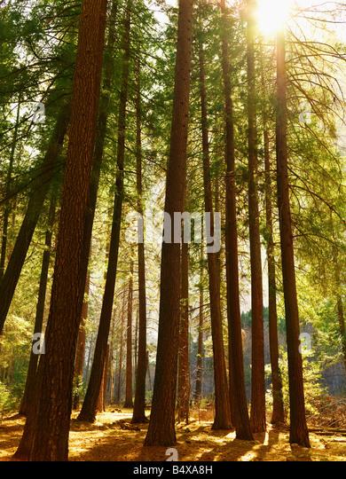 Ruhigen Wald Szene Stockbild