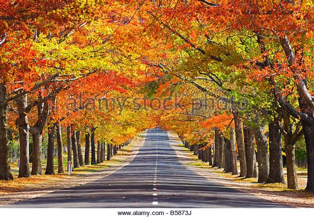 Denkmal-Allee im Herbst, Einfassung Macedon, Victoria, Australien, Pazifik Stockbild