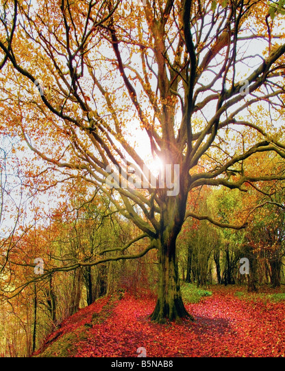 GB - GLOUCESTERSHIRE: Herbst Szene am Crickley Hill Country Park Stockbild