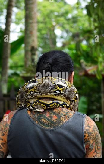 Tätowierten Mann von hinten, Python um den Hals, in der Nähe von Ubud, Bali, Indonesien, Südostasien Stockbild