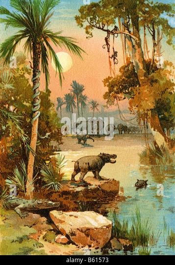 Elefanten und Flusspferde entlang des Kongo-Flusses Stockbild