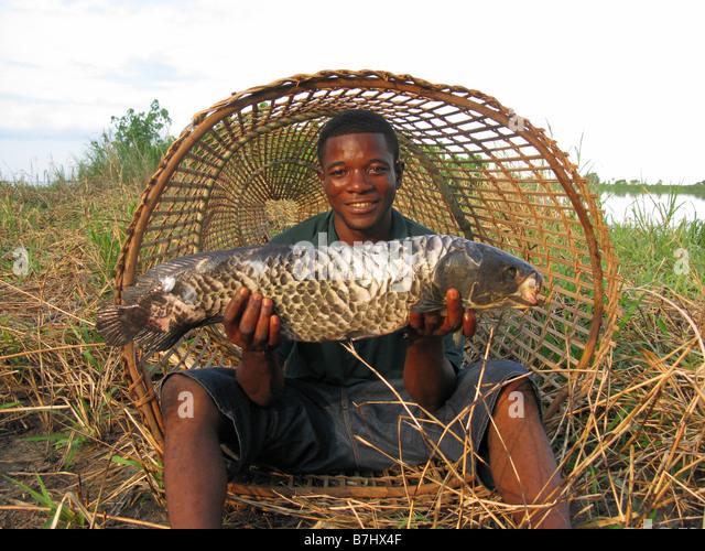 Kongolesischen Fischer in der Mündung des konischen Fischfalle mit großen Fischen am unteren Kongo Demokratische Stockbild