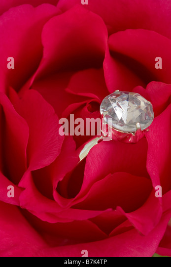 Verlobungsring versteckt in rote rose Stockbild