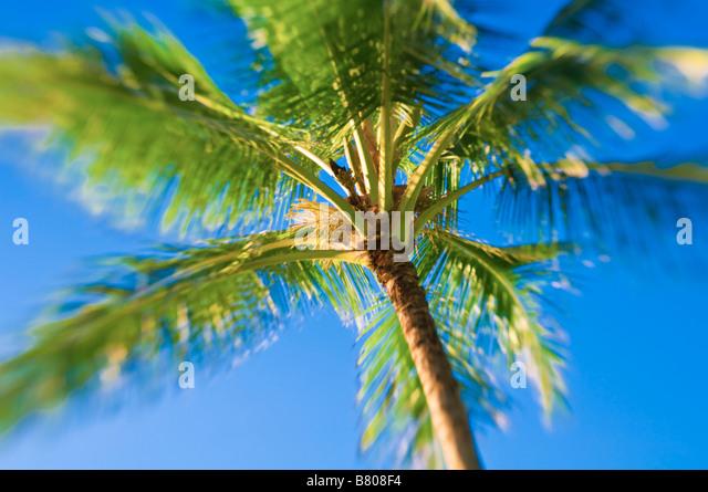 Kokospalme und blauen Himmel Insel Kauai Hawaii Stockbild