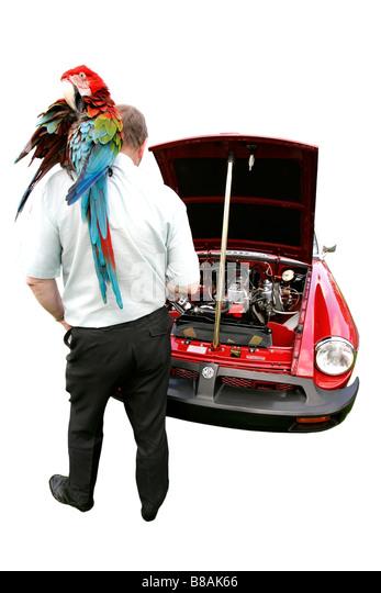 MG rote Oldtimer-sprechende Papagei Geschichte Fahrzeug Vintage Antipoden symbol Sammler alter golden Autofahren Stockbild