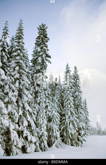Crystal Mountain Ski resort Stockbild