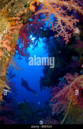 Scubadiver reichem weichen Korallenbewuchs auf das Wrack der Aida, Brother Islands, Ägypten erkunden Stockbild
