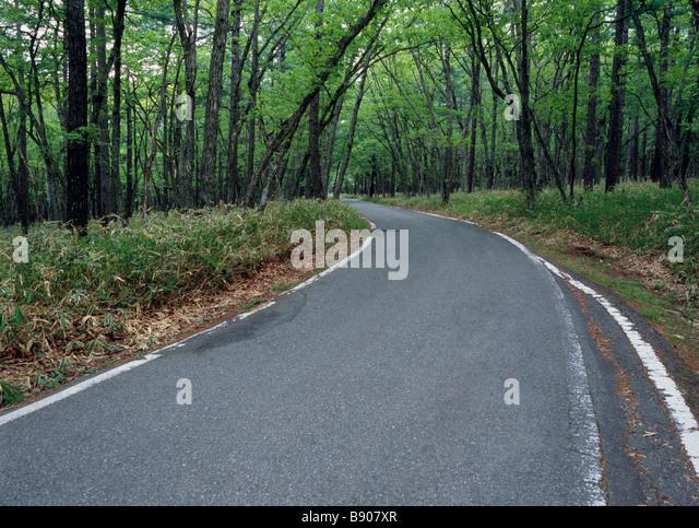 Kurve Straße durch Wald Stockbild