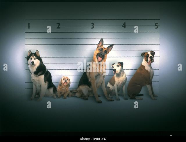 FL3053, KITCHIN/HURST; Kriminelle Line-up schlechte Hunde Stockbild
