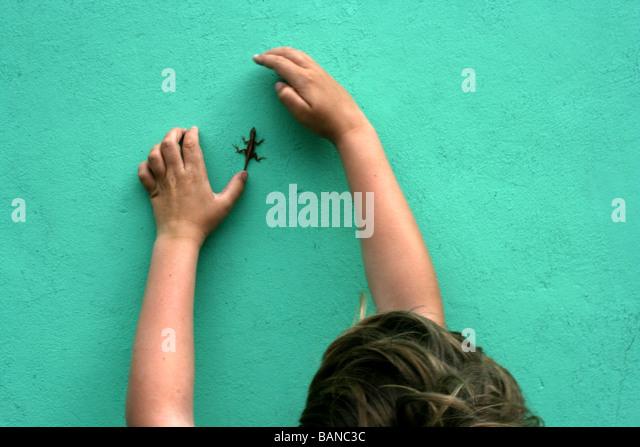 kleiner Junge versucht, fangen einen Gecko kriechen auf einer Wand, Tropeninsel, Nassau, Bahamas Stockbild