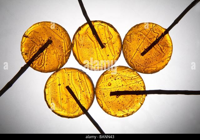 gelbe Lutscher auf grauem Hintergrund Stockbild