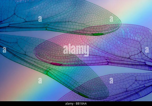 Zusammenfassung der Libellenflügel und Regenbogen. Stockbild