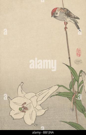 Kleiner Vogel auf Lily Pflanze. Stockbild