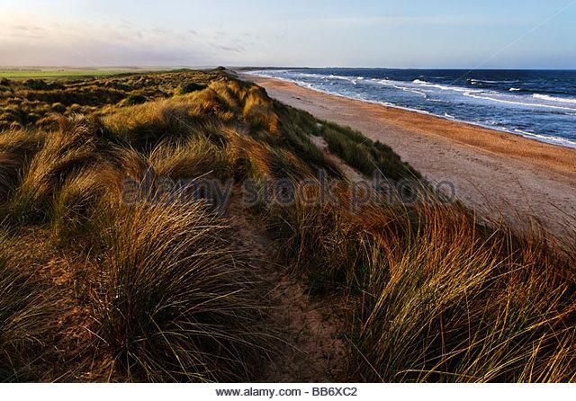 Dünen und Strand Stockbild