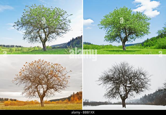 vier Jahreszeiten-Baum Stockbild