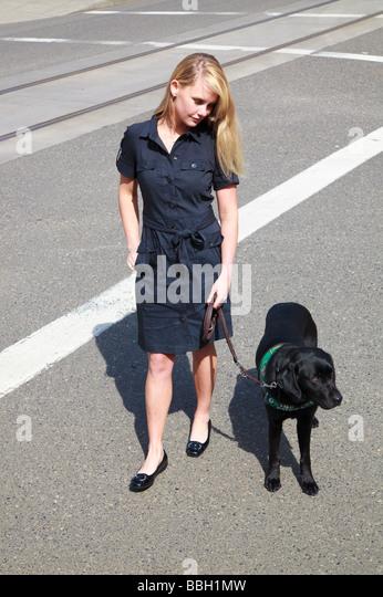 Blondes Mädchen zu Fuß über Straße in Zebrastreifen mit schwarzer Labrador Blindenhund sehendes Stockbild
