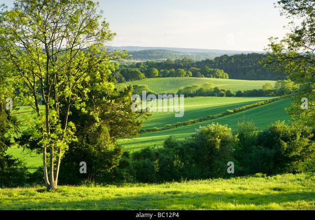 Südlich von North Downs in Newlands Ecke, Surrey, UK anzeigen Stockbild
