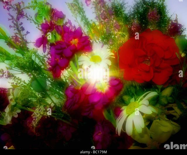 Blumen-ARRANGEMENT: Sommerblumen Stockbild