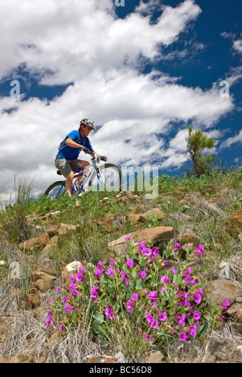 Radfahrer, die den Fibark Mountain Bike Rennen auf Tenderfoot Berg Salida Colorado USA Stockbild