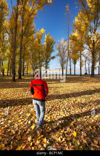 Herbstliche Bäume beim Boot Rampe Picknickplatz von Ökonomie Laufschwellkraftwerken Snowy Mountains südlichen Stockbild