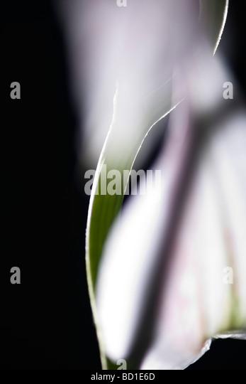 Blütenstiel, close-up - Stock-Bilder