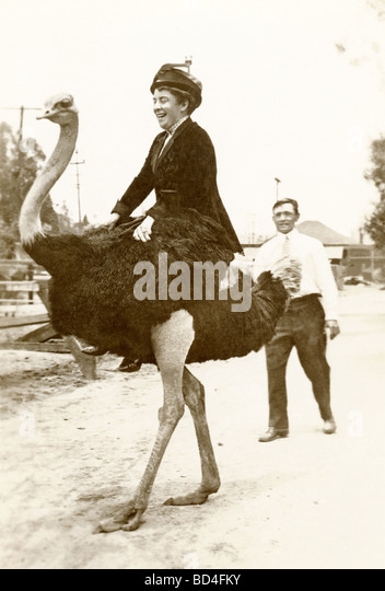 Frau reitet ein Strauß Stockbild