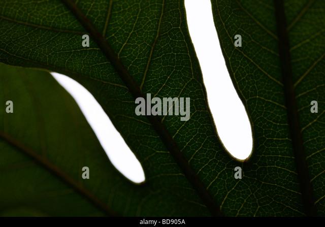 schönes Blatt in einem zeitgenössischen Stil Kunstfotografie Jane Ann Butler Fotografie JABP535 Stockbild
