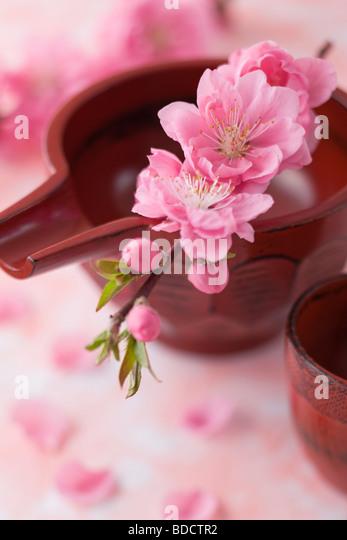 Sake-Becher und Pfirsich Blüten Stockbild