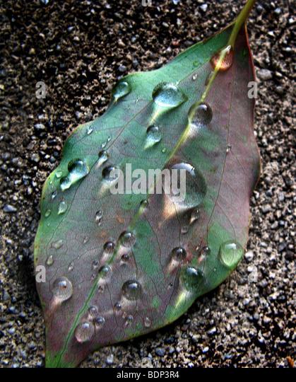 Ein Blatt mit Wassertropfen auf Boden Stockbild