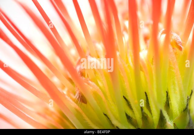 abstrakter Stil Blume Stockbild